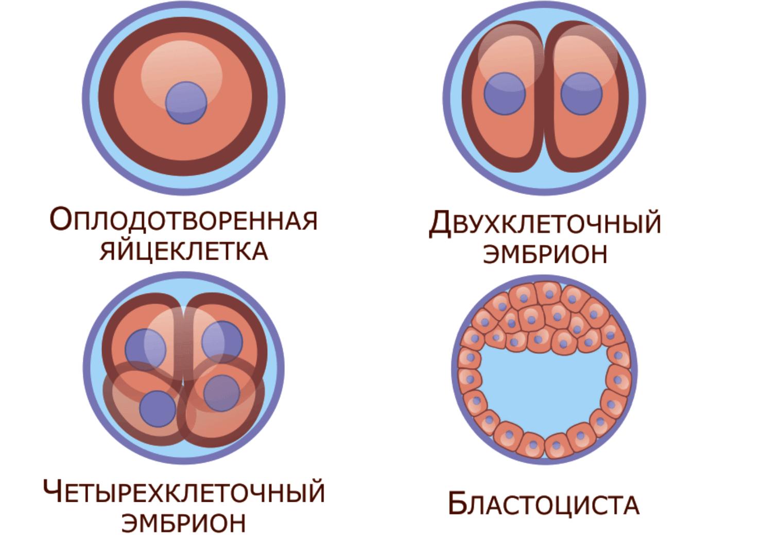 4 этапа эко