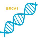 BRCA ген - лечение в Израиле